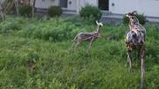 富松篤「牡鹿に棲まうもの」